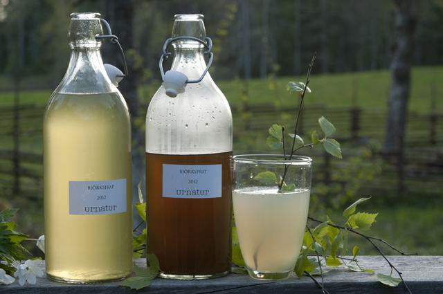 moskito – birch booze