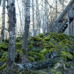 skogseremitaget / luftslott; air castle / wood hermitage