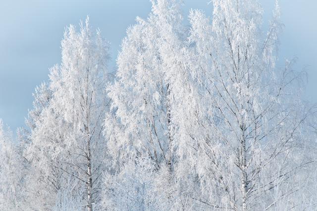 Urnatur winter in its beauty