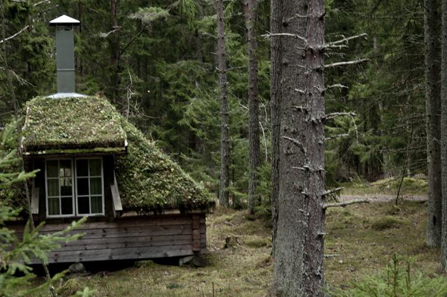moss cabin