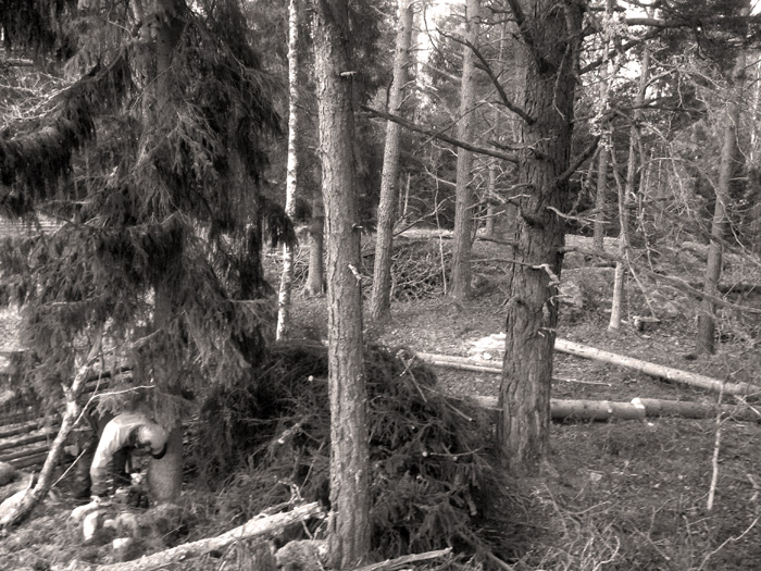 Urnaturs skogsbruk